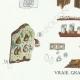 DÉTAILS 03 | Mycologie - Champignon - Coniophora - Solenia Pl.226