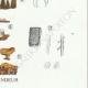 DÉTAILS 06 | Mycologie - Champignon - Coniophora - Solenia Pl.226