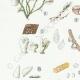 DÉTAILS 02 | Mycologie - Champignon - Cyphella Pl.227
