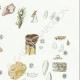 DÉTAILS 05 | Mycologie - Champignon - Cyphella Pl.227