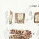 DÉTAILS 01 | Mycologie - Champignon - Corticium Pl.228