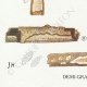 DÉTAILS 03 | Mycologie - Champignon - Corticium Pl.228