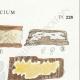 DÉTAILS 04 | Mycologie - Champignon - Corticium Pl.228