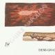 DÉTAILS 03 | Mycologie - Champignon - Corticium Pl.229