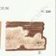 DÉTAILS 04 | Mycologie - Champignon - Corticium Pl.229
