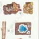 DÉTAILS 05 | Mycologie - Champignon - Corticium Pl.229