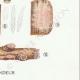 DÉTAILS 06 | Mycologie - Champignon - Corticium Pl.229