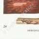 DÉTAILS 07 | Mycologie - Champignon - Corticium Pl.229