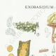 DETAILS 01 | Mycology - Mushroom - Exobasidium - Hypochnus Pl.231