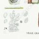 DETAILS 03 | Mycology - Mushroom - Exobasidium - Hypochnus Pl.231