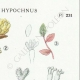 DETAILS 04 | Mycology - Mushroom - Exobasidium - Hypochnus Pl.231