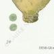 DETAILS 03 | Mycology - Mushroom - Scleroderma Pl.234