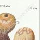 DETAILS 04 | Mycology - Mushroom - Scleroderma Pl.234