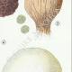 DETAILS 05 | Mycology - Mushroom - Scleroderma Pl.234