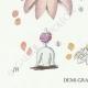 DETAILS 03   Mycology - Mushroom - Geaster Pl.235