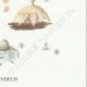DETAILS 06   Mycology - Mushroom - Geaster Pl.235