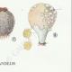DÉTAILS 06 | Mycologie - Champignon - Lycoperdon - Utraria pl.237