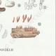 DETAILS 06 | Mycology - Mushroom - Hydnangium - Octaviana Pl.240