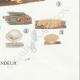 DETAILS 08 | Mycology - Mushroom - Calocera - Dacrymyces Pl.241