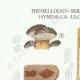 DETAILS 01 | Mycology - Mushroom - Tremellodon - Sebacina Pl.243