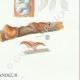 DETAILS 06 | Mycology - Mushroom - Tremellodon - Sebacina Pl.243