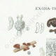 DÉTAILS 01   Mycologie - Champignon - Exidia - Tremella Pl.244