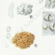 DÉTAILS 02   Mycologie - Champignon - Exidia - Tremella Pl.244