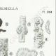 DÉTAILS 04   Mycologie - Champignon - Exidia - Tremella Pl.244
