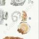 DÉTAILS 05   Mycologie - Champignon - Exidia - Tremella Pl.244
