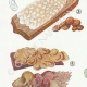 DETAILS 02 | Mycology - Mushroom - Tremella - Auricularia Pl.246
