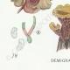 DETAILS 03 | Mycology - Mushroom - Tremella - Auricularia Pl.246