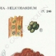DETAILS 04 | Mycology - Mushroom - Tremella - Auricularia Pl.246