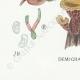 DETAILS 07 | Mycology - Mushroom - Tremella - Auricularia Pl.246
