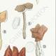 DETALLES 05 | Micología - Seta - Morchella - Helvella Pl.248