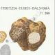 DÉTAILS 04 | Mycologie - Champignon - Elaphomyces - Chaeromyces - Terfezia Pl.250