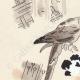 DETALLES 02 | Zoológico de Amberes - Aras - Bélgica (Ketty Muller)