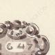 DÉTAILS 03   Anvers - Belgique - Cul-de-lampe - Antverpia Mater Artium et Mercatorum 10/26