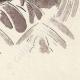 DETAILS 07 | Antwerp - Belgium - Cul-de-lampe - Antverpia Mater Artium et Mercatorum 25/26