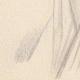 DÉTAILS 03 | Portrait de Alix de Lamartine (Ketty Muller)
