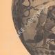 DÉTAILS 02 | Vases grecs - Amphore chalcidienne - Héraclès - VIème Siècle (Vulci)