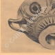 DETAILS 05 | Greek vases - Attic cup - Nikosthenes - VIth Century