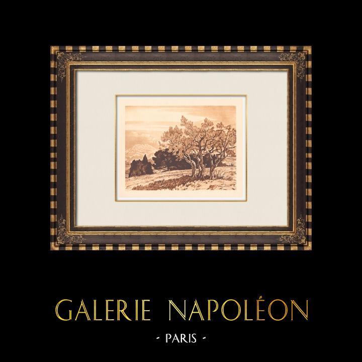Antique Prints & Drawings | Olive trees - Le Tholonet near Aix-en-Provence (France)  | Copper engraving | 1943