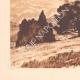 DETAILS 03 | Olive trees - Le Tholonet near Aix-en-Provence (France)