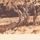 DETAILS 04 | Olive trees - Le Tholonet near Aix-en-Provence (France)