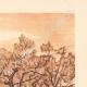 DETAILS 05 | Olive trees - Le Tholonet near Aix-en-Provence (France)