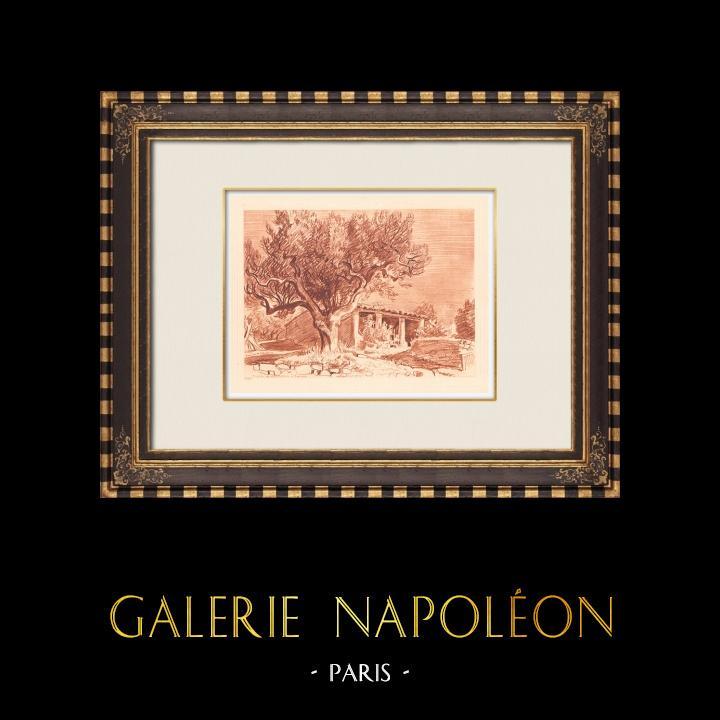 Antique Prints & Drawings | Lanscape of Sanary - Olive tree - Bastide - Var - Provence-Alpes-Côte d'Azur (France) | Copper engraving | 1943