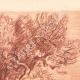 DETAILS 02 | Lanscape of Sanary - Olive tree - Bastide - Var - Provence-Alpes-Côte d'Azur (France)