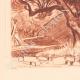 DETAILS 03 | Lanscape of Sanary - Olive tree - Bastide - Var - Provence-Alpes-Côte d'Azur (France)