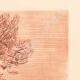 DETAILS 05 | Lanscape of Sanary - Olive tree - Bastide - Var - Provence-Alpes-Côte d'Azur (France)