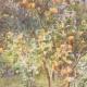 DÉTAILS 02   Les citronniers au printemps - Sicile (Italie)
